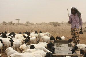 water desalination africa